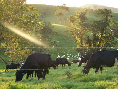 Dairy-Atherton-Tablelands.jpg